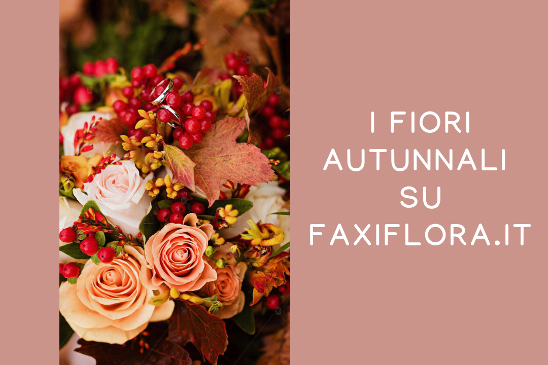 Fiori autunnali su Faxiflora.it
