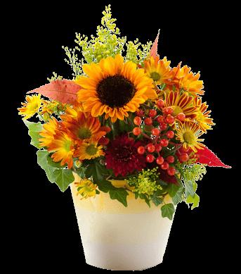 Faxiflora catalogo fiori a domicilio for Catalogo piante e fiori