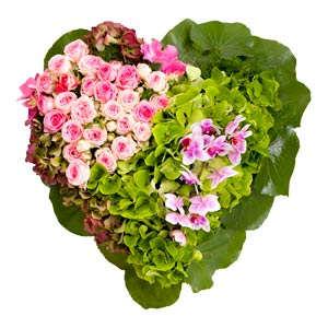 Consegna Fiori On Line.Faxiflora Consegna Fiori Colorati A Domicilio